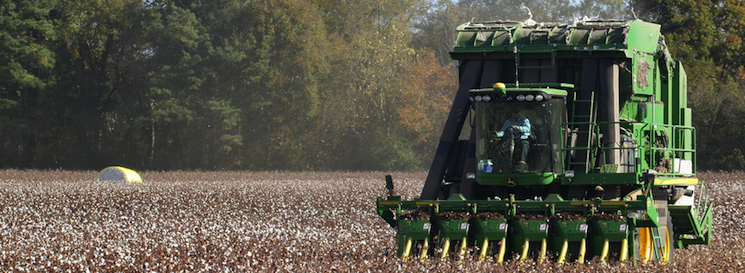 Cotton of the Carolinas Harvesting